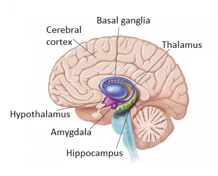 mindfulness rewires the brain